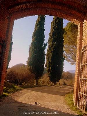 Cypress in Marostica, Veneto, Italy. Trail to the medieval times castle