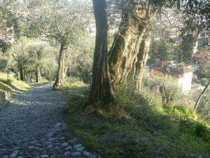trail to the middle ages castle, Marostica, Veneto, Italy